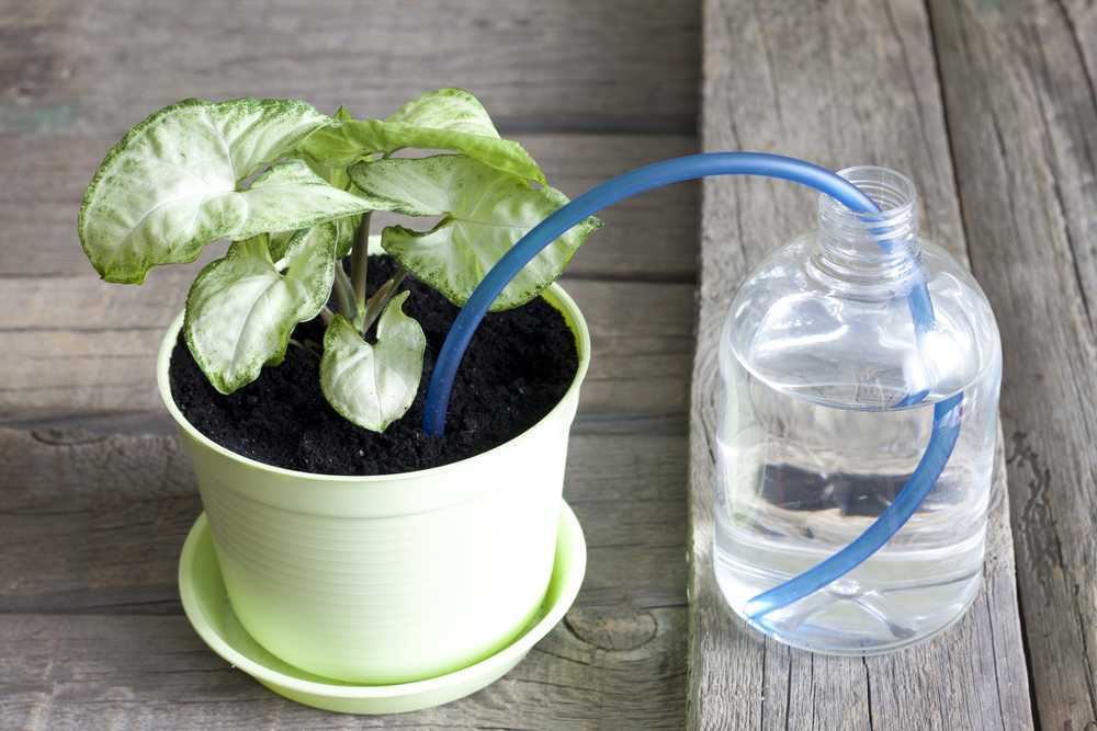 5 Ways to Automatically Water Your Plants When You're Gone