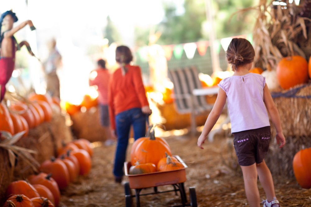 15 of the Best Pumpkin Patches in Alabama